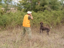 hunting_phaesant_1